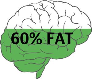 Brain is 60 Percent Fat